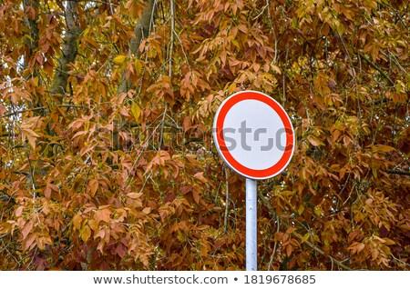 Geen teken natuur park gras Stockfoto © 5xinc