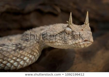 肖像 · 積極的な · ヘビ · 鼻 · 自然 - ストックフォト © igabriela