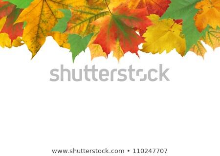 őszi levelek keret fehér szöveg absztrakt narancs Stock fotó © tetkoren