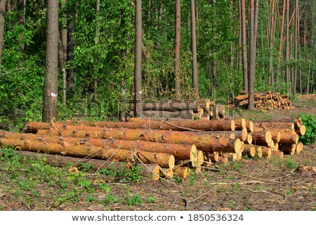 pile of logs in deforestation area stock photo © blasbike