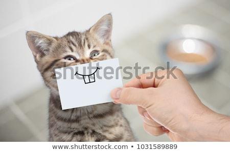 komik · kediler · artistik · sevimli · kedi · yavruları - stok fotoğraf © frescomovie