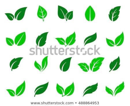 paesaggistica · verde · naturale · foglia · logo · foglie - foto d'archivio © acong_kecil