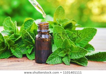 Menta aceites esenciales primer plano vela aromaterapia hierba Foto stock © Lana_M