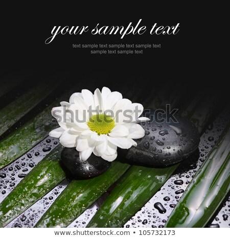 Humide camomille rosée gouttes macro fleurir Photo stock © kayros