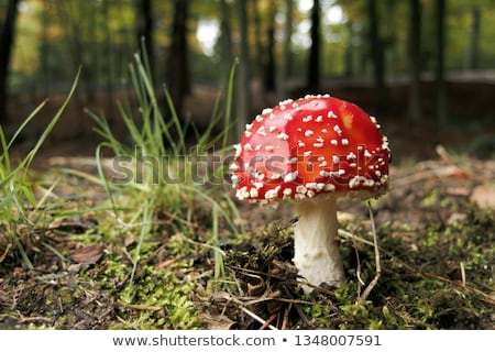 beautiful inedible mushroom Stock photo © romvo