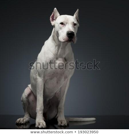 Kutya ül stúdió asztal vicces sötét Stock fotó © vauvau