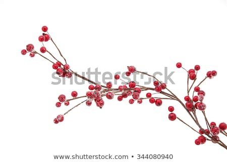 支店 赤 液果類 描いた 緑 テクスチャ ストックフォト © blackmoon979