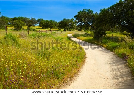 Via de la Plata way cereal fields in Spain Stock photo © lunamarina