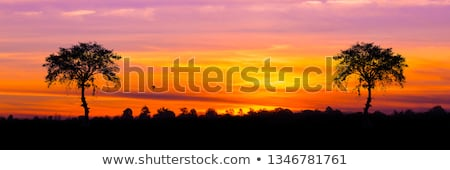 Silhouettes of elephants on African sunset background Stock photo © gomixer