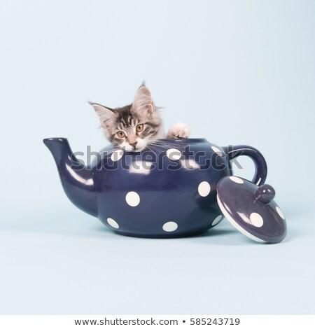 Maine · kiscica · fehér · macska · szomorú · díszállat - stock fotó © ivonnewierink