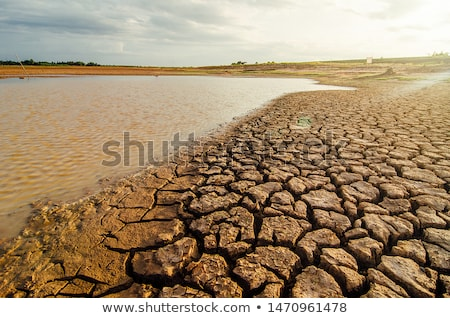Drought and consequences Stock photo © Kidza