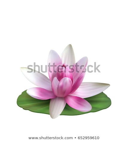 Water Lily, Nenuphar, Spatter-dock, Pink Lotus on Green Leaf. Flower Isolated Stock photo © smeagorl