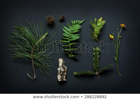 Green fern leaves background on bark tree, top view Stock photo © yelenayemchuk