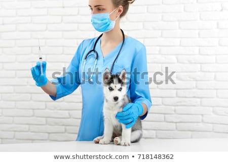 Portré nő állatorvos injekció aranyos kutyakölyök Stock fotó © wavebreak_media