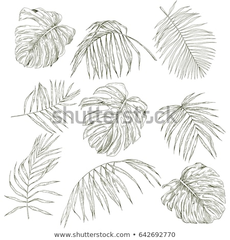 tropical bush with green leaves hand drawn stock photo © loopall