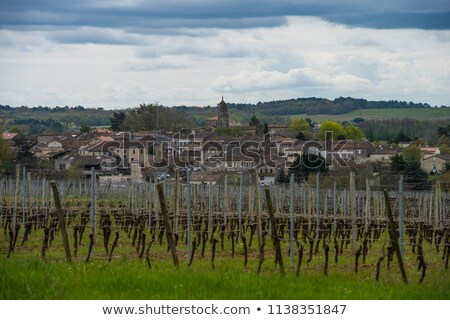 Bordeaux Vineyard, France, Aquitaine, Gironde, 33, Monsegur Stock photo © FreeProd