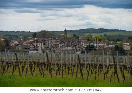 wijngaard · zonsopgang · hemel · voorjaar · gras · wijn - stockfoto © freeprod