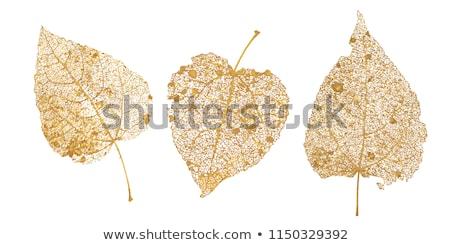 ayarlamak · altın · yaprakları · takı · altın · parlak - stok fotoğraf © blackmoon979