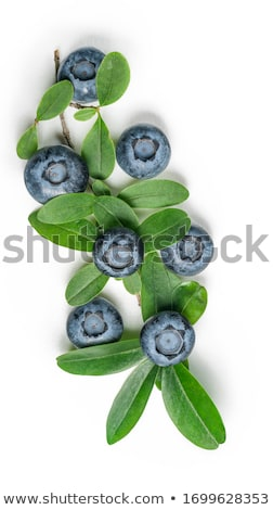 Fresh raw organic blueberries with leaf in pile. Macro close up Stock photo © DenisMArt