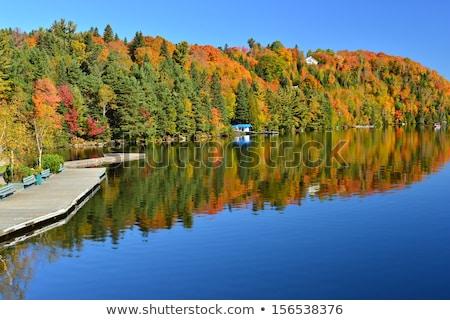 ősz erdő terep cipők természet hegy Stock fotó © boggy