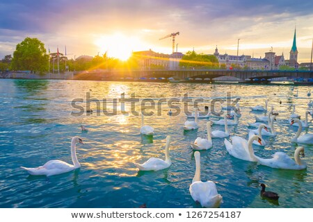 Zurich lake and river waterfront aerial view Stock photo © xbrchx