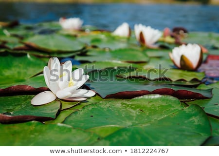 Spring flowers in the forest Stock photo © Kotenko