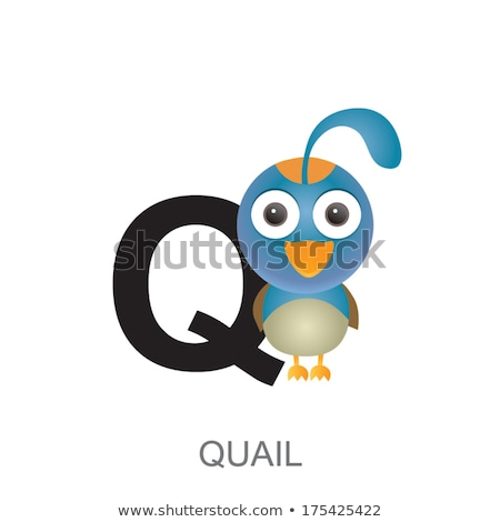 Q Letter with Quail Bird for Alphabet Learning Stock photo © robuart