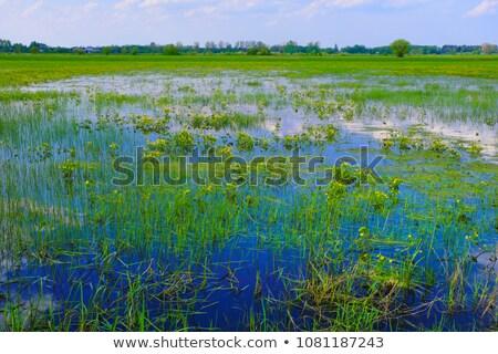 Green Wetlands in the Spring Stock photo © wildnerdpix