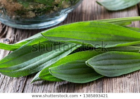 Ribwort plantain syrup with fresh ribwort plantain leaves stock photo © madeleine_steinbach
