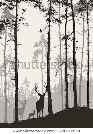 Foto d'archivio: Natura · notte · cervo · abete · rosso · alberi · vettore