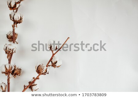 Wooden Cotton Buds On Sack Cloth Stock photo © AndreyPopov