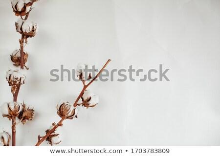 Algodón tela primer plano madera Foto stock © AndreyPopov
