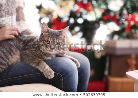 close up of woman with christmas gift and cat Stock photo © dolgachov
