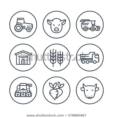農業の · 機械 · トラクター · フィールド · ビジネス - ストックフォト © pikepicture