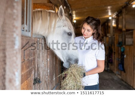 Young sporty woman looking at white horse while feeding her with fresh hay Stock photo © pressmaster