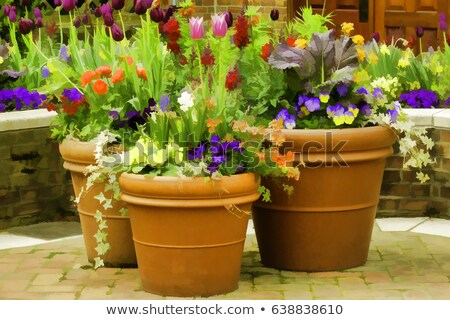 Flower pots display Stock photo © Zela