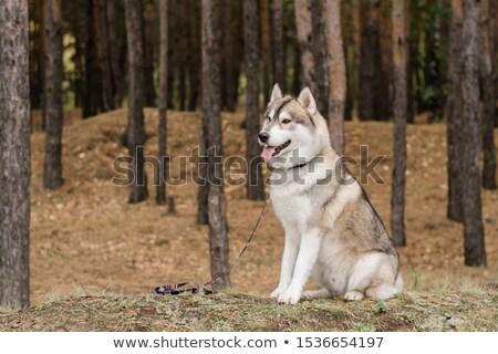 bir · genç · köpek · oturma · çim · portre - stok fotoğraf © pressmaster