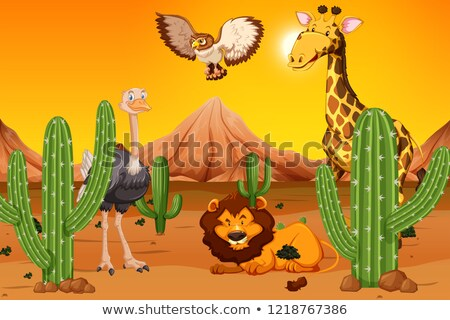 Autruche désert illustration sable ailes sauvage Photo stock © adrenalina