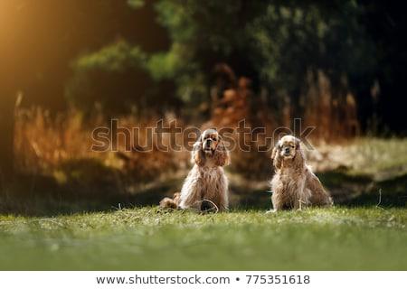 jonge · vrouw · tienermeisje · huisdier · hond · spelen · vrouw - stockfoto © vladacanon
