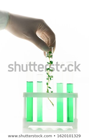 Researcher putting flask with selected plant into box with green liquid in tubes Stock photo © pressmaster