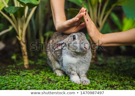 Hands protect rabbit. Cosmetics test on rabbit animal. Cruelty free and stop animal abuse concept Stock photo © galitskaya
