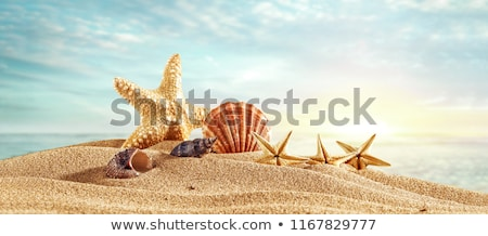 Sea shells with photos on sand background. stock photo © borysshevchuk
