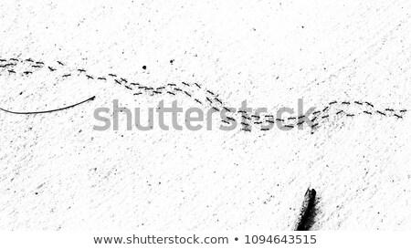 Grunge hangya koszos keret rovar Stock fotó © Stocksnapper