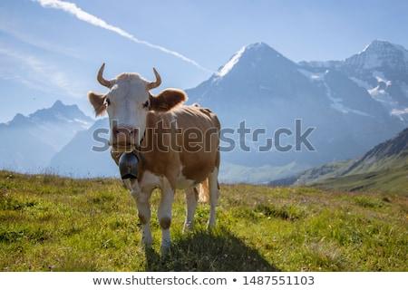 Stockfoto: Alpen · koe · retro · leder · geluid · object
