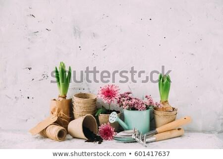 potting shed stock photo © hjpix