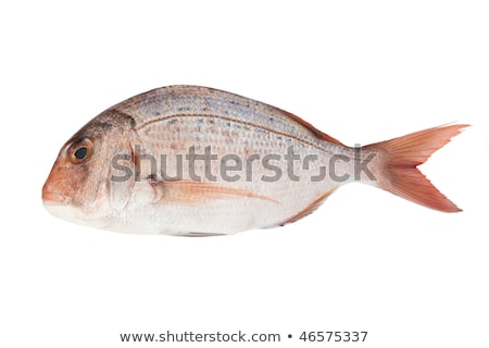 couch sea bream Stock photo © Antonio-S