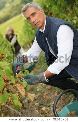 50 years old man and woman doing grape harvest Stock photo © photography33