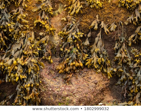 Moss and sea weed covered rocks Stock photo © franky242