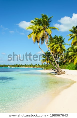Playa de arena Barbados Caribe árbol paisaje mar Foto stock © phbcz