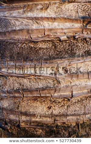 Kokosnoot boom schors shot Stockfoto © get4net